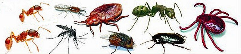 Уничтожение насекомых в москве
