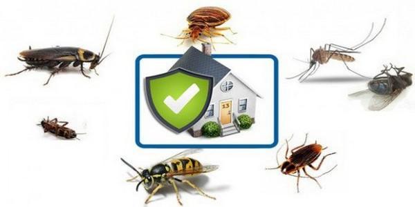 уничожение насекомых