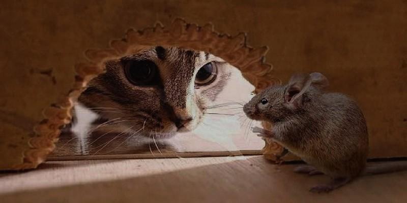 уничтожение мышей на дому
